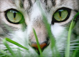 Cat in Grass...