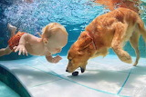 Labrador and toddler in pool