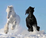 Two beautiful horses running in snow