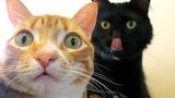 Gats - Cats