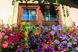 Flowers, Germany...