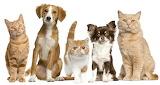 Pets - Animalons