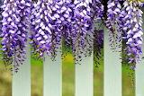 ☺♥ Pretty fence...
