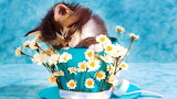#Sleepy Kitty in a Flower Cup