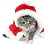 #Christmas Kitty