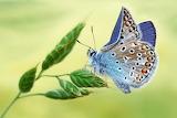 beautiful in blue