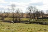 Sheep On A Sunny Sunday