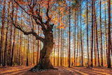 EvgeniDinevPhotography King of the Forest nature photography