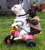 2 Pugs on a Trike