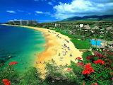 Landscape-beach-ocean-sea-city-flowers-nature
