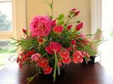 Roses--2