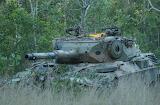 Australian Leopard AS1