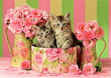 Kittens in floral box
