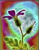 FlowerFractal