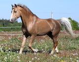 Lo-horse-906857606