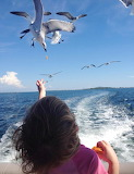 LA Gulf Hungry Seagulls
