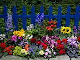 112935-Beautiful-Flower-Garden