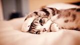 Cat-kittens-animals