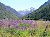 New - Zealand, landscape