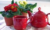 ^ Teapot, cup, primroses