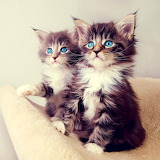 Two kittens...
