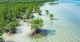 Mangrove forest, Japan