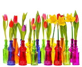 colored vases and flowers