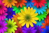 ☺ Flowers...