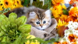 Kitten surrounded by flowers