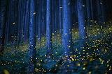 FirefliesKei