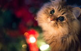 Cute-cat-look-up-lights-bokeh