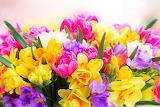 #Beautiful Spring Flowers