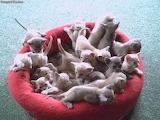 Lots fo Kitties