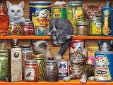 Spice Rack Kittens