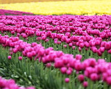 ☺ Beautiful field of flowers...