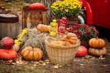 Pumpkin, harvest