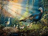 turkey-in-the-sun-rays