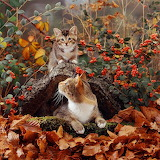 12528-Cat-and-kitten-in-autumn-scene