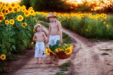 children in a sunflower field