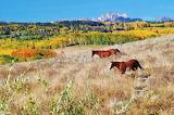 Autumn Horses in Colorado