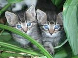 Stray-kittens