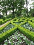 Formal garden boxwood hedges