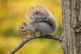 Squirrel in a tree, by Bruce Wunderlich