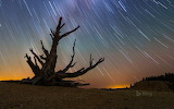 Star trails and a bristlecone pine at Bryce Canyon National Park