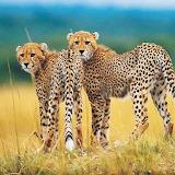 Wild Africa...