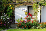 Flowers at Home 195 - Photo from Piqsels id-zaglj
