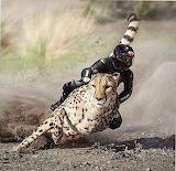 African Speedster