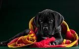 ☺♥ Cute puppy...