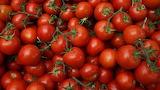 F90-tomatoes