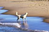 Shaking water off dog at beach
